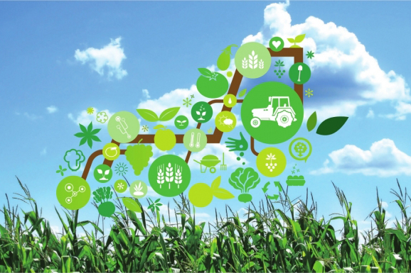 Smart Agriculture and Hydroponic FarmingSolutions